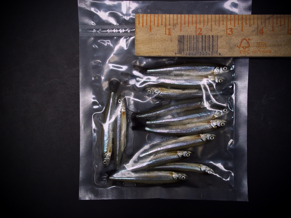"Preserved Smelt (3.5-4"") 12ct"