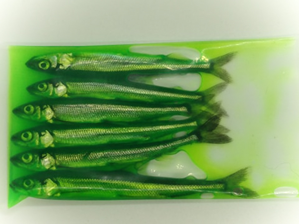 "Preserved Smelt (3.5-4"") 8 ct - Dyed Green"
